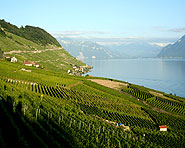 On the Lavaux vineyard terraces