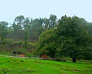 Kastanienwald Monte Pioda
