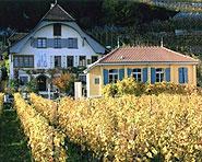 Vinothèque Viniterra lac de Bienne