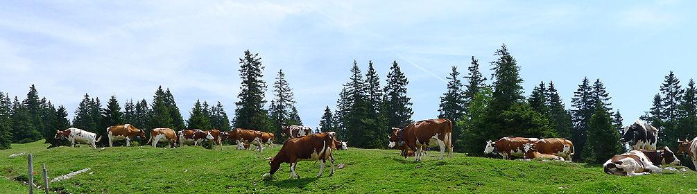 7 Route du Jura